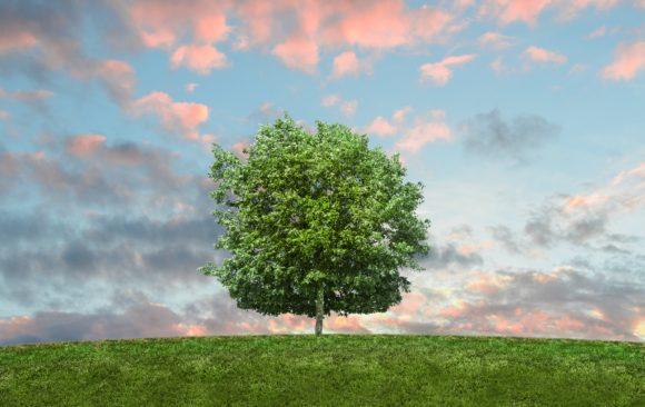 Go Green with UKRFCU eStatements